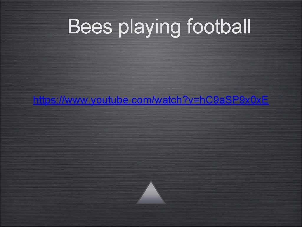 Bees playing football https: //www. youtube. com/watch? v=h. C 9 a. SP 9 x