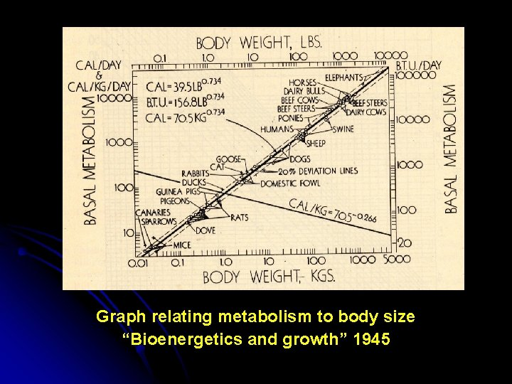 """Graph relating metabolism to body size """"Bioenergetics and growth"""" 1945"""