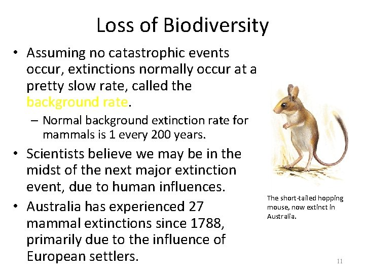 Loss of Biodiversity • Assuming no catastrophic events occur, extinctions normally occur at a