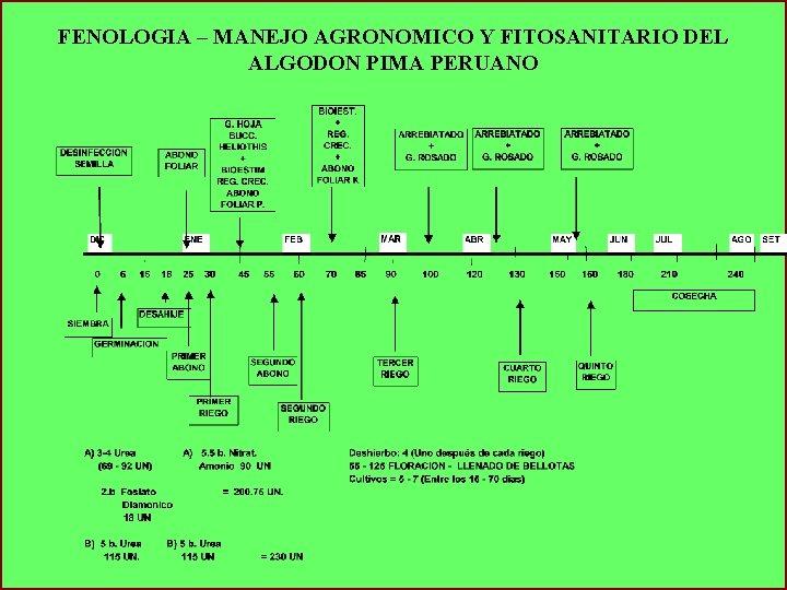 FENOLOGIA – MANEJO AGRONOMICO Y FITOSANITARIO DEL ALGODON PIMA PERUANO