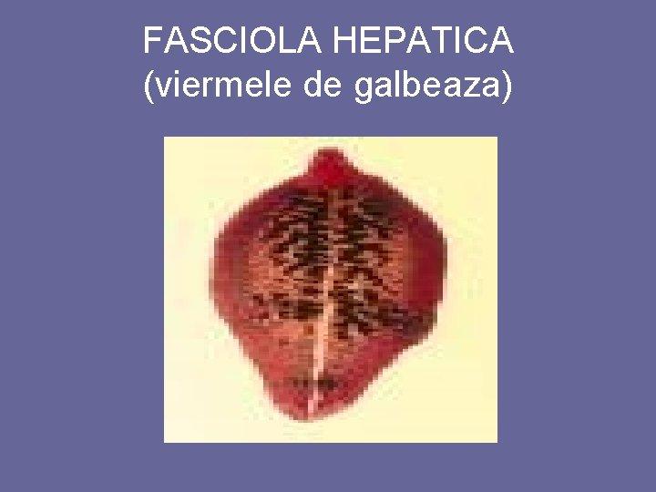 gălbează - Wikționar Viermele de galbeaza