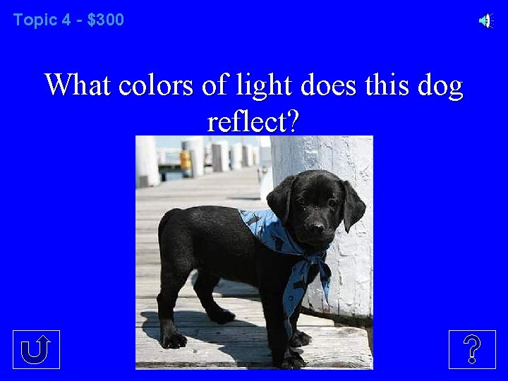 Topic 4 - $300 What colors of light does this dog reflect?