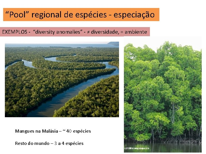 """""""Pool"""" regional de espécies - especiação EXEMPLOS - """"diversity anomalies"""" - ≠ diversidade, ="""