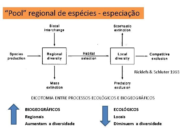 """""""Pool"""" regional de espécies - especiação Ricklefs & Schluter 1993 DICOTOMIA ENTRE PROCESSOS ECOLÓGICOS"""