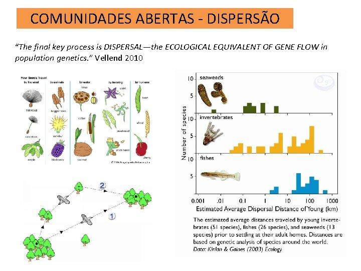 "COMUNIDADES ABERTAS - DISPERSÃO ""The final key process is DISPERSAL—the ECOLOGICAL EQUIVALENT OF GENE"