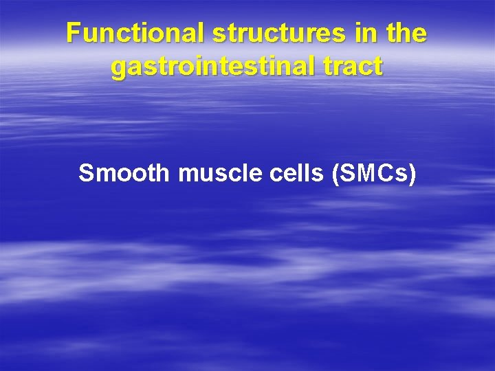 Functional structures in the gastrointestinal tract Smooth muscle cells (SMCs)