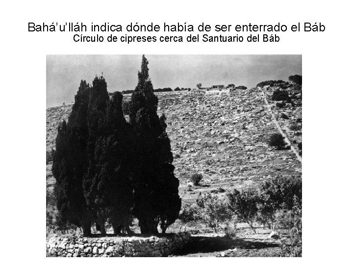 Bahá'u'lláh indica dónde había de ser enterrado el Báb Círculo de cipreses cerca del