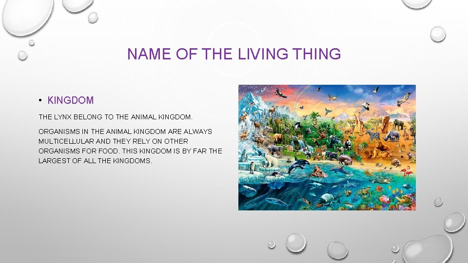 NAME OF THE LIVING THING • KINGDOM THE LYNX BELONG TO THE ANIMAL KINGDOM.