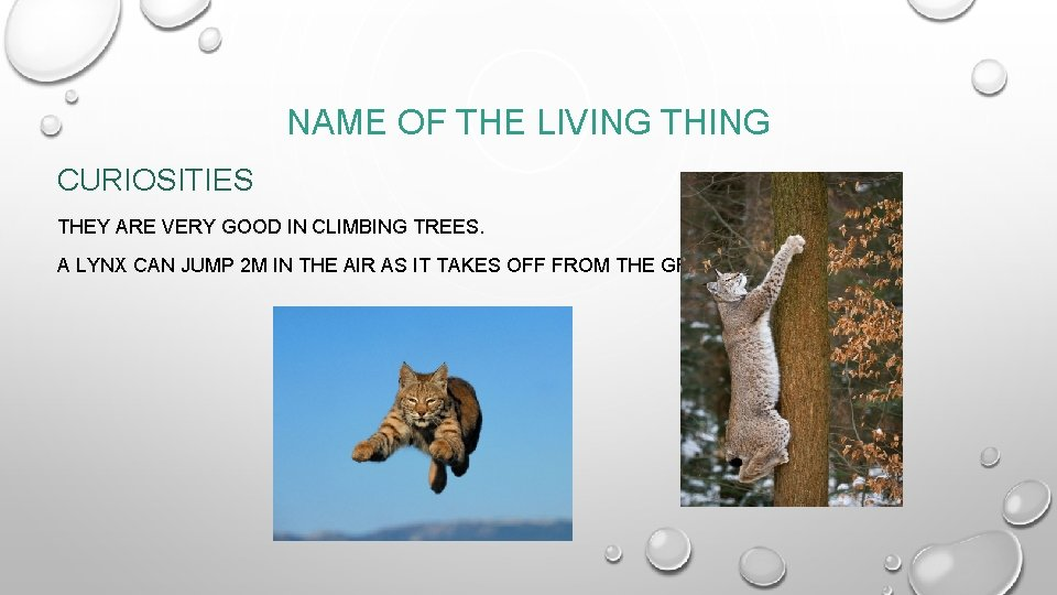 NAME OF THE LIVING THING CURIOSITIES THEY ARE VERY GOOD IN CLIMBING TREES. A