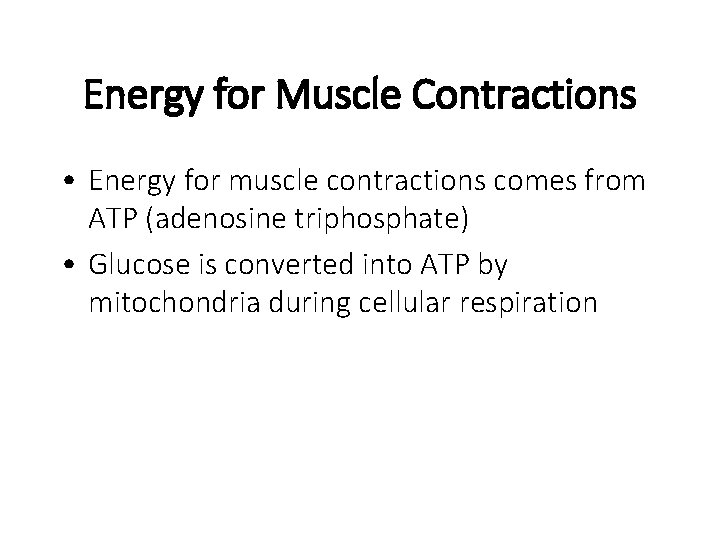 Energy for Muscle Contractions • Energy for muscle contractions comes from ATP (adenosine triphosphate)