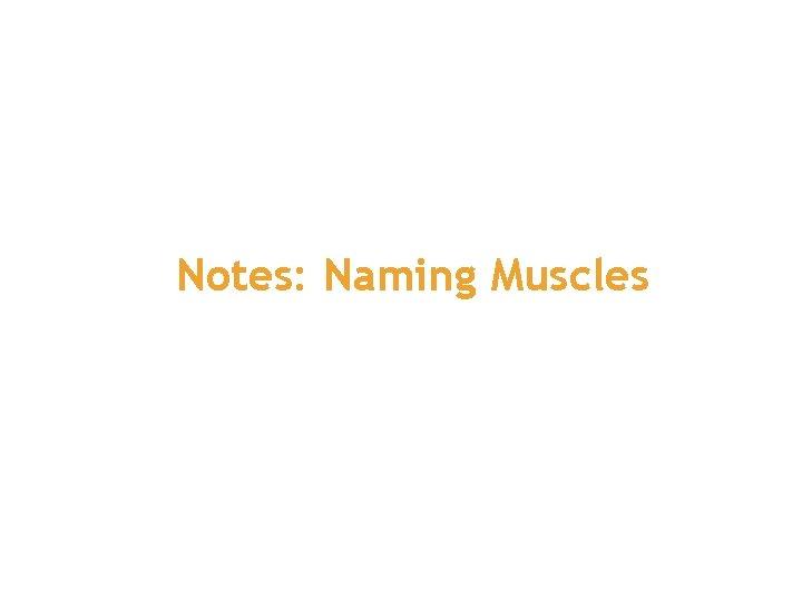 Notes: Naming Muscles