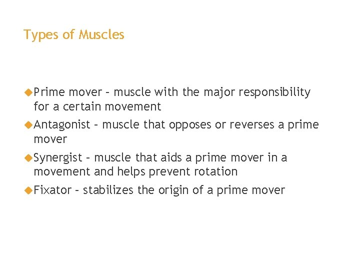 Types of Muscles Prime mover – muscle with the major responsibility for a certain