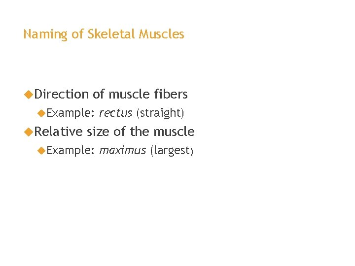 Naming of Skeletal Muscles Direction of muscle fibers Example: Relative rectus (straight) size of