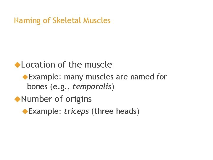 Naming of Skeletal Muscles Location of the muscle Example: many muscles are named for