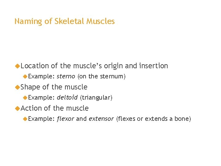 Naming of Skeletal Muscles Location of the muscle's origin and insertion Example: Shape of