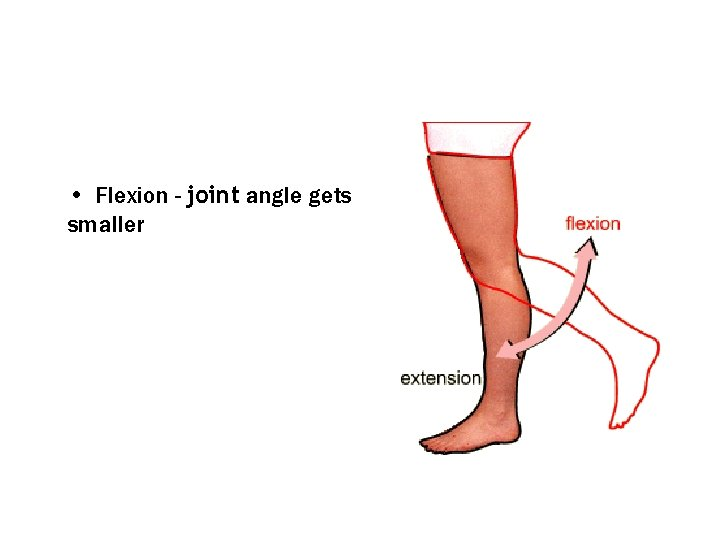 • Flexion - joint angle gets smaller