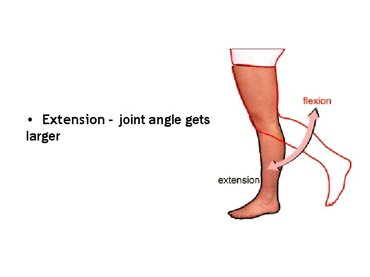 • Extension - joint angle gets larger