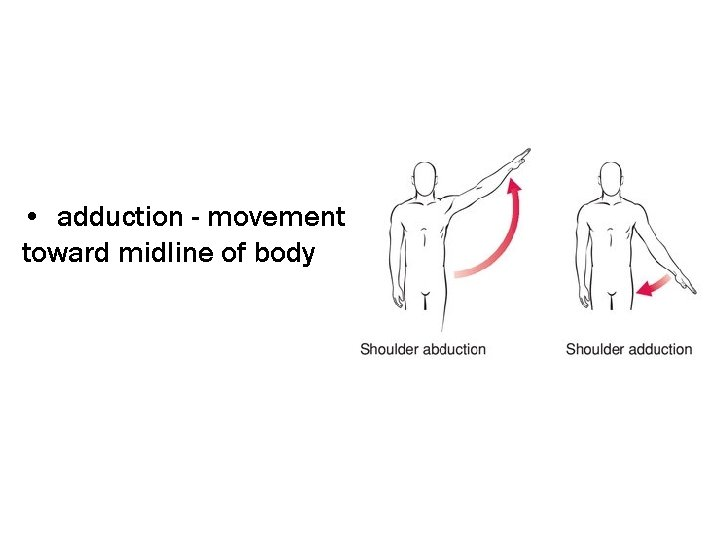 • adduction - movement toward midline of body