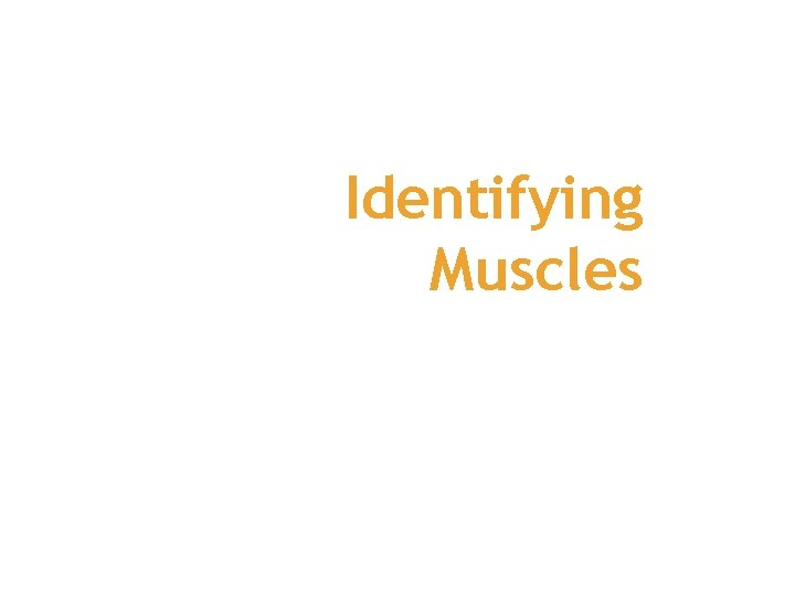 Identifying Muscles