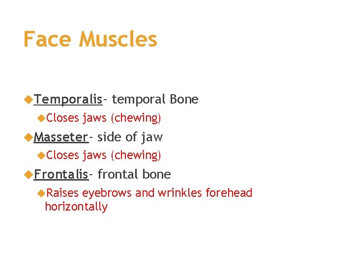 Face Muscles Temporalis Closes jaws (chewing) Masseter Closes side of jaws (chewing) Frontalis Raises