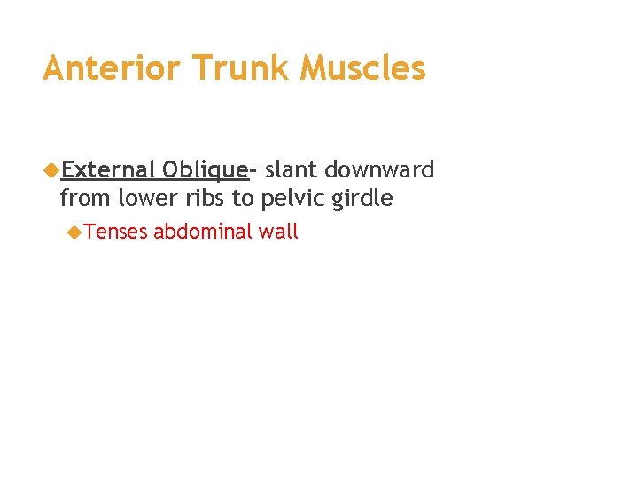 Anterior Trunk Muscles External Oblique- slant downward from lower ribs to pelvic girdle Tenses