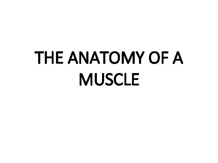 THE ANATOMY OF A MUSCLE