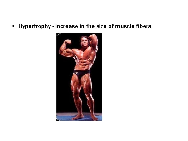 • Hypertrophy - increase in the size of muscle fibers