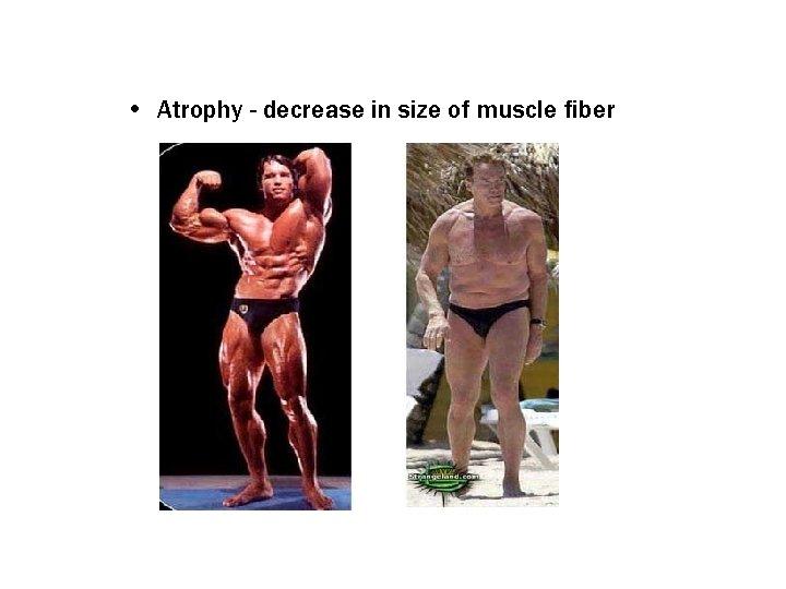 • Atrophy - decrease in size of muscle fiber
