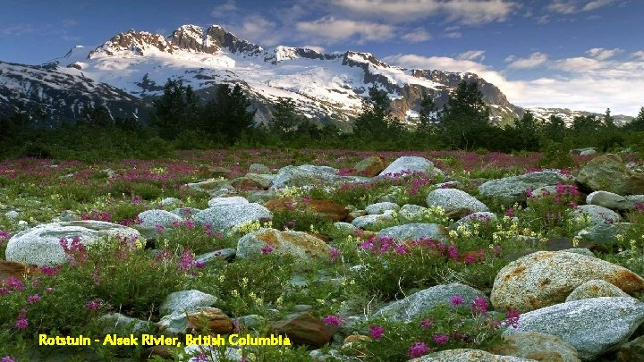 Rotstuin - Alsek Rivier, British Columbia