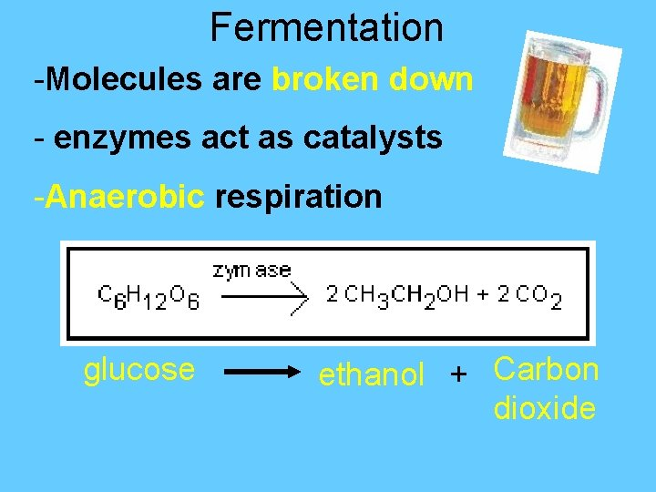 Fermentation -Molecules are broken down - enzymes act as catalysts -Anaerobic respiration glucose ethanol