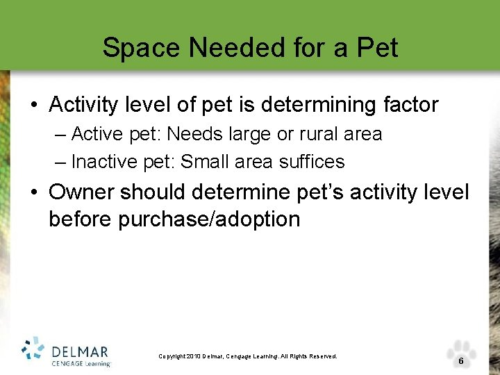 Space Needed for a Pet • Activity level of pet is determining factor –