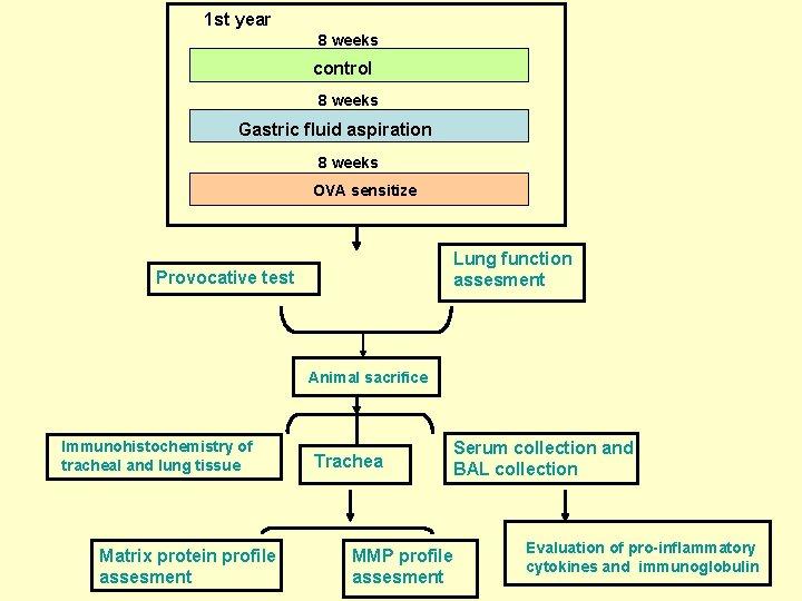 1 st year 8 weeks control 8 weeks Gastric fluid aspiration 8 weeks OVA