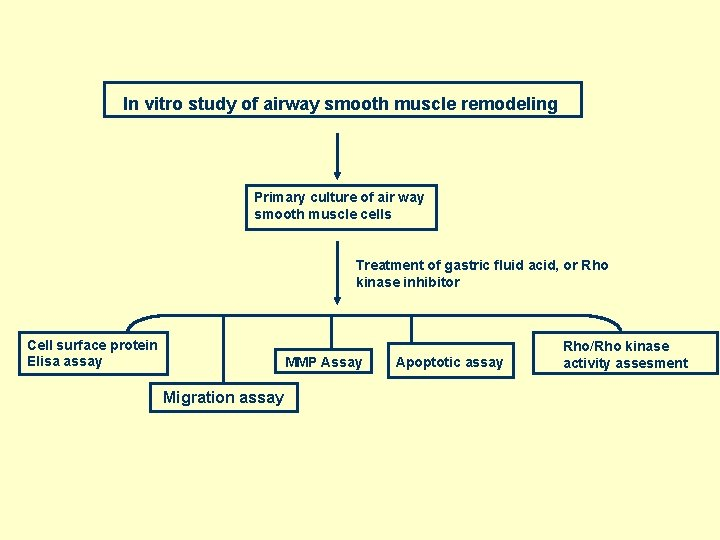 In vitro study of airway smooth muscle remodeling Primary culture of air way smooth