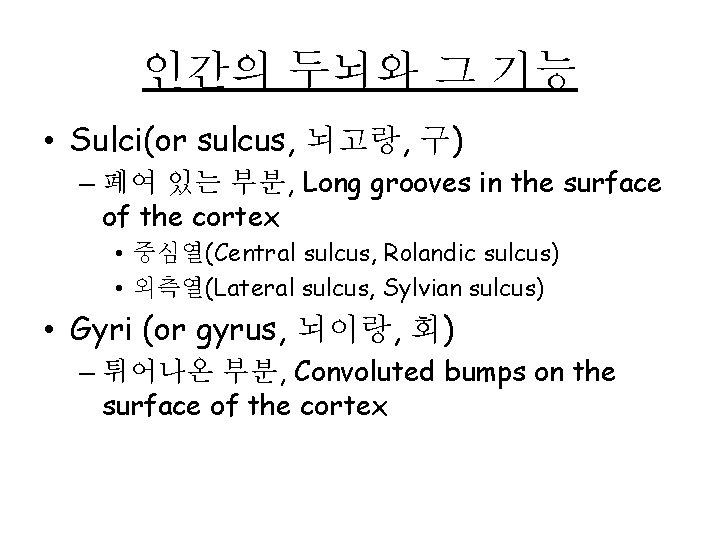 인간의 두뇌와 그 기능 • Sulci(or sulcus, 뇌고랑, 구) – 폐여 있는 부분, Long