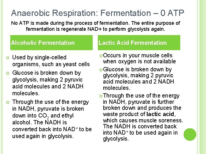 Anaerobic Respiration: Fermentation – 0 ATP No ATP is made during the process of
