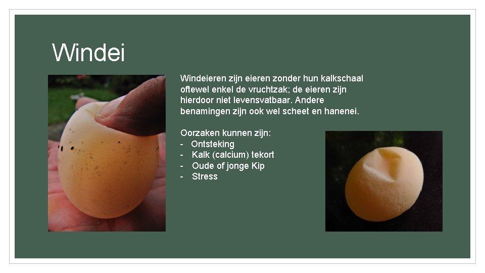 Windeieren zijn eieren zonder hun kalkschaal oftewel enkel de vruchtzak; de eieren zijn hierdoor