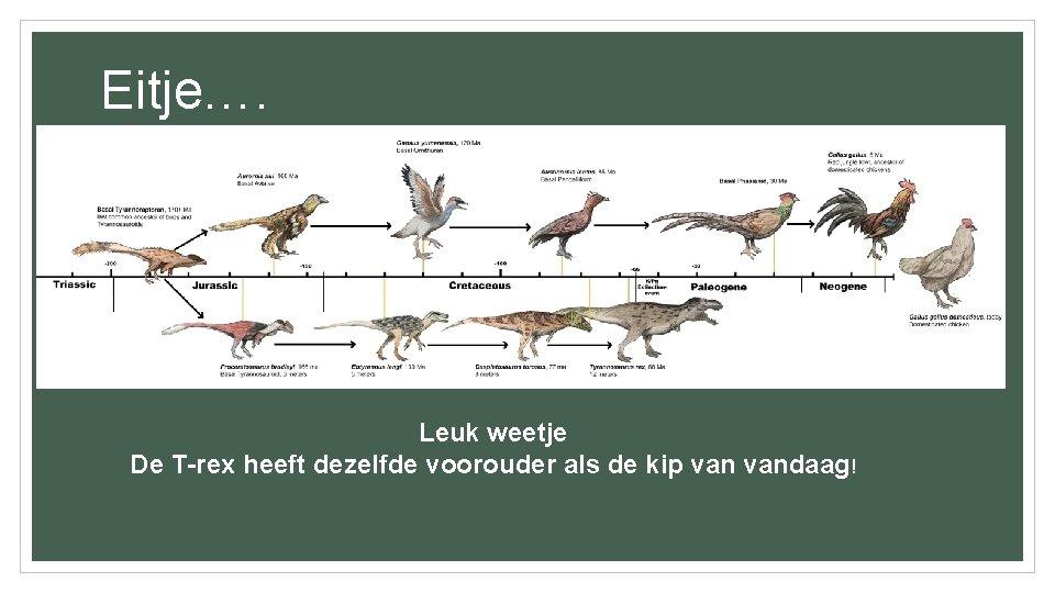 Eitje…. • Honderden miljoenen jaren voordat er kippen waren, legden vissen, amfibieën en reptielen