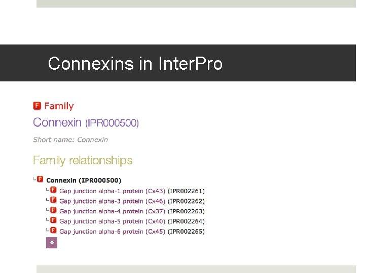 Connexins in Inter. Pro