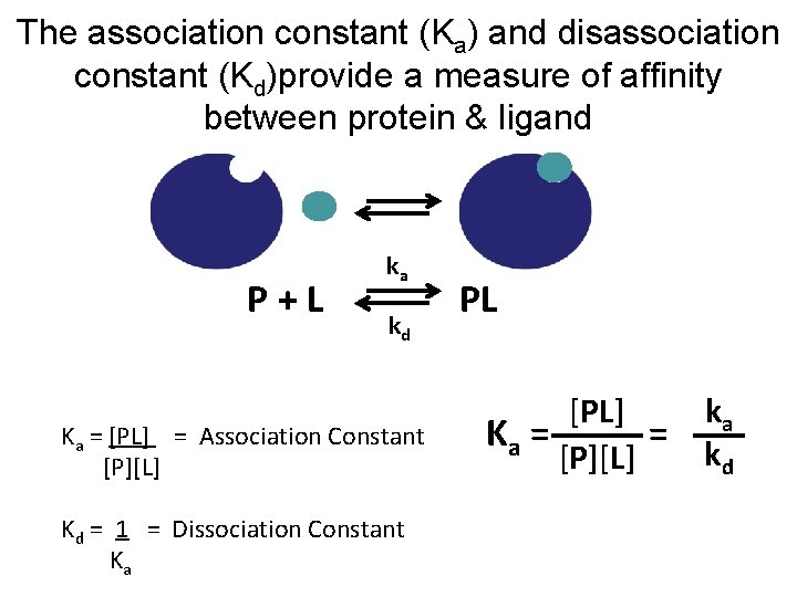 The association constant (Ka) and disassociation constant (Kd)provide a measure of affinity between protein