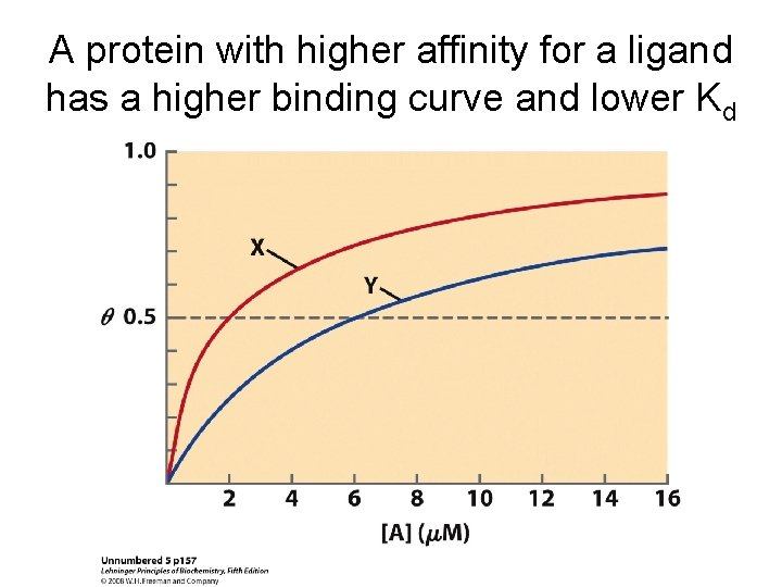 A protein with higher affinity for a ligand has a higher binding curve and
