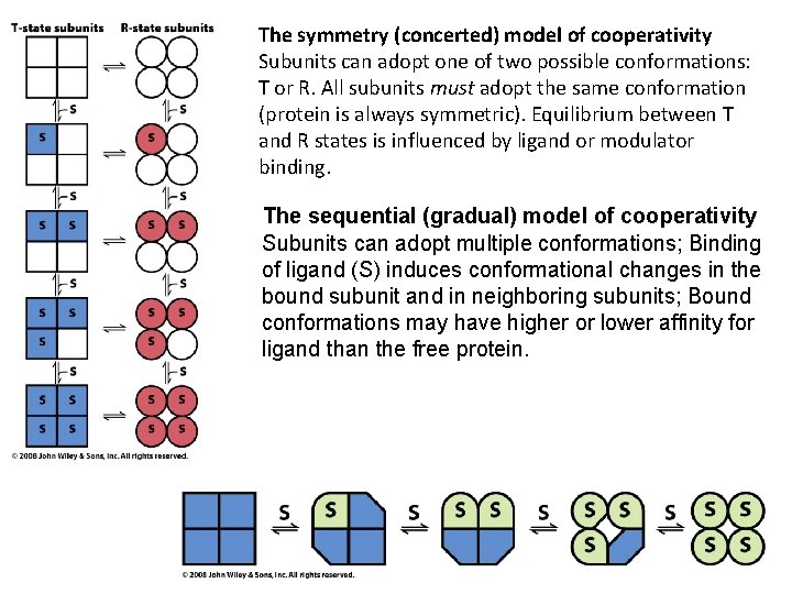 The symmetry (concerted) model of cooperativity Subunits can adopt one of two possible conformations: