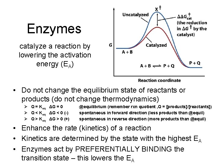 Enzymes catalyze a reaction by lowering the activation energy (EA) • Do not change