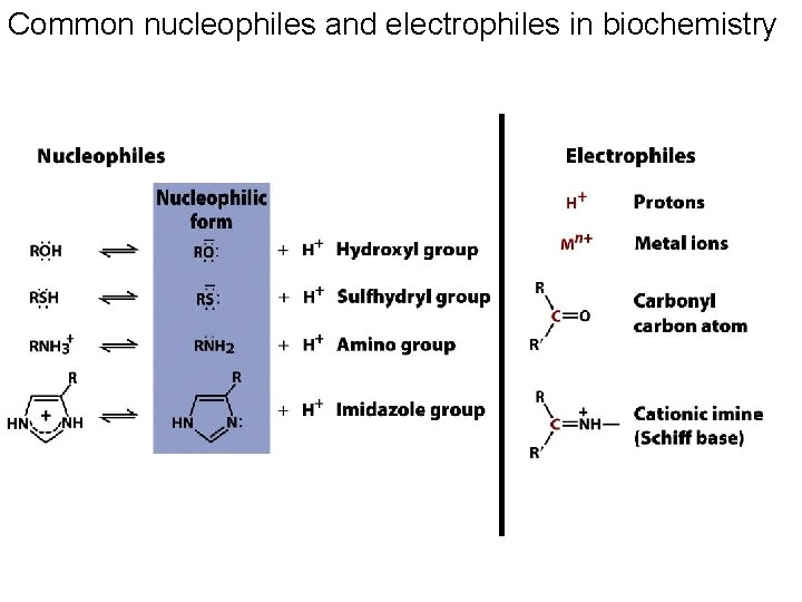 Common nucleophiles and electrophiles in biochemistry