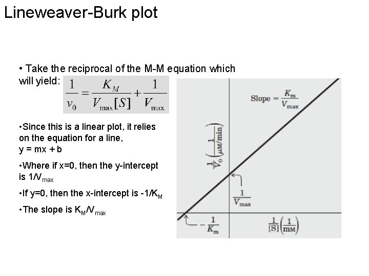 Lineweaver-Burk plot • Take the reciprocal of the M-M equation which will yield: •