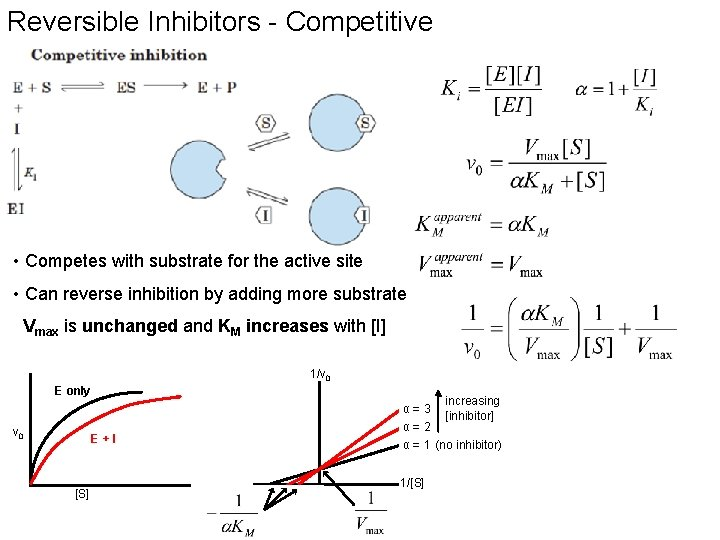 Reversible Inhibitors - Competitive • Competes with substrate for the active site • Can