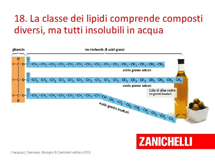 18. La classe dei lipidi comprende composti diversi, ma tutti insolubili in acqua Cavazzuti,