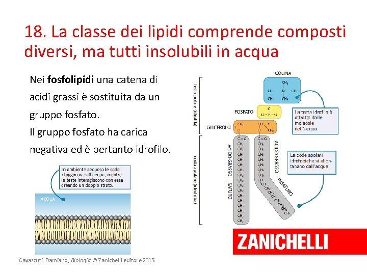 18. La classe dei lipidi comprende composti diversi, ma tutti insolubili in acqua Nei