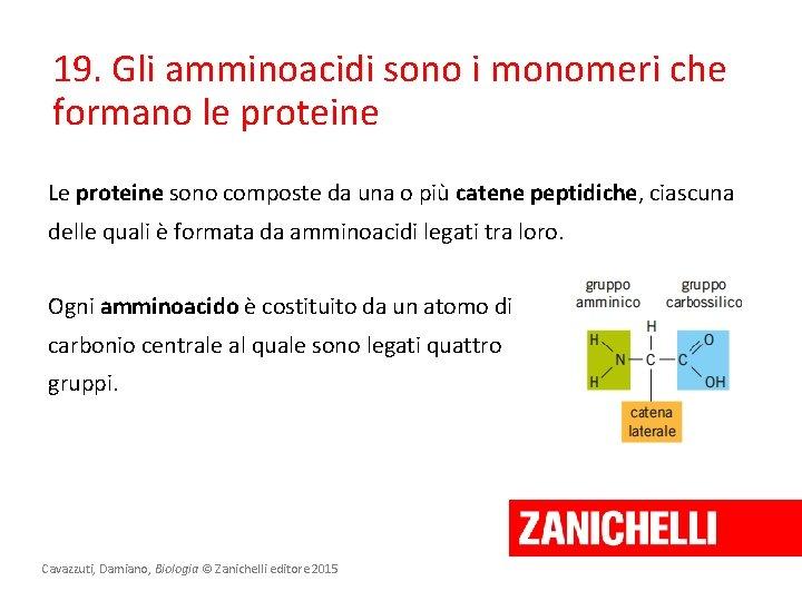 19. Gli amminoacidi sono i monomeri che formano le proteine Le proteine sono composte