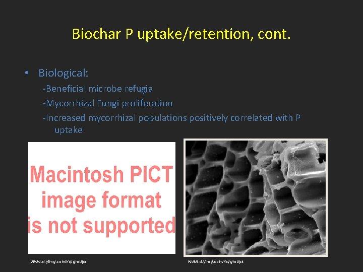 Biochar P uptake/retention, cont. • Biological: -Beneficial microbe refugia -Mycorrhizal Fungi proliferation -Increased mycorrhizal