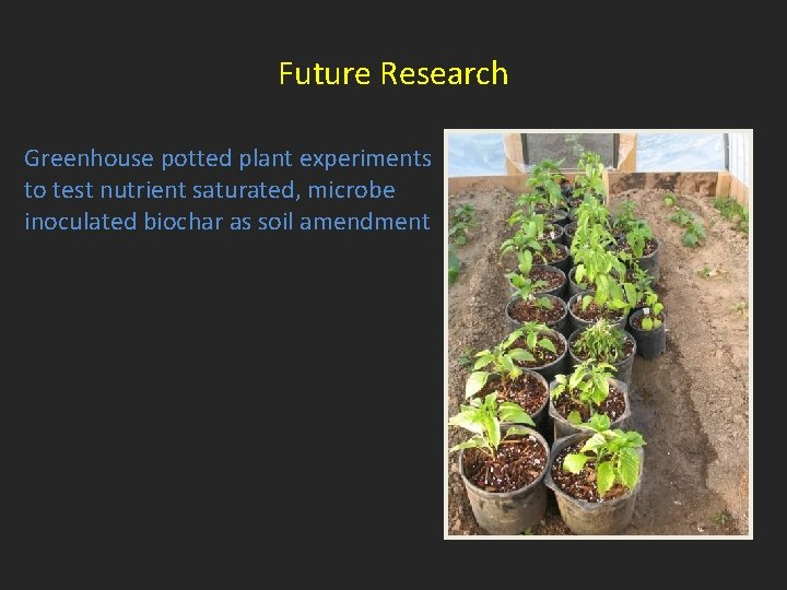 Future Research Greenhouse potted plant experiments to test nutrient saturated, microbe inoculated biochar as